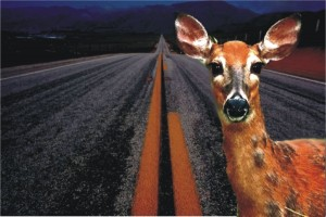 a deer is stuck in fear in the middle of the road.