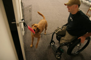 A service dog is a specially trained animal that learns specific behaviors to assist it's owner.