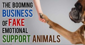 business for fake service dogs licenses is booming- a dog shaking its paw with a human.